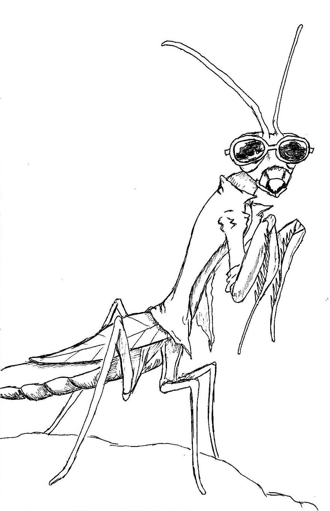 Insect Things – All Creatures Great and Okay